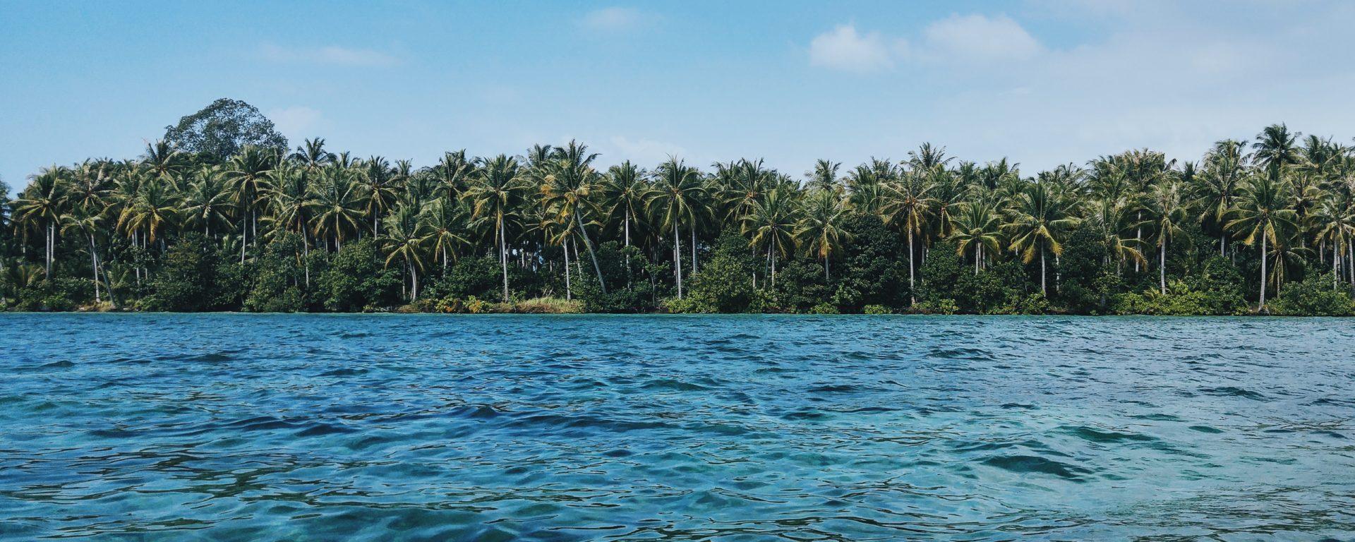 palmen insel stocksnap